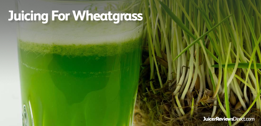 juicing for wheatgrass