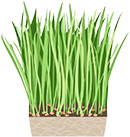 juice icon wheatgrass